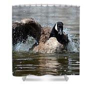 Summer Lovin - Canadian Goose Shower Curtain