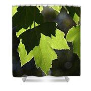 Summer Maple Leaves Shower Curtain