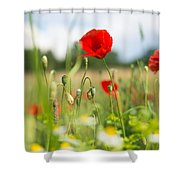 Summer Meadow With Red Poppy Shower Curtain