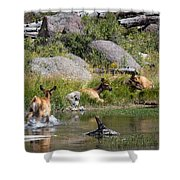 Summer Morning Dip - Elk In Yellowstone National Park - Wyoming Shower Curtain