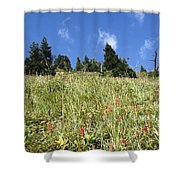 Summer Mountain Landscape Shower Curtain