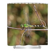 Summer Pondhawk Dragonfly Shower Curtain