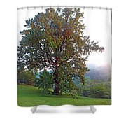 Summer Poplar Tree Filtered Shower Curtain