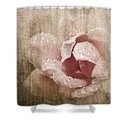 Summer Rose #1 Shower Curtain