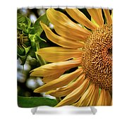 Summer Splendor Shower Curtain