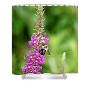 Summer Time And The Feeding Is Easy Shower Curtain