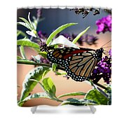 Summer Time Beauty Shower Curtain