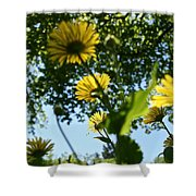 Summer Viewpoint Shower Curtain