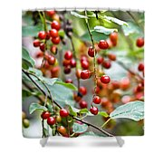 Summer Wild Berries Shower Curtain