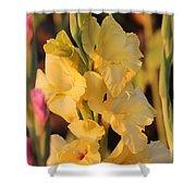 Summer Yellow Gladiolus Shower Curtain