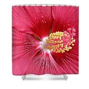 Summerific Cranberry Crush 06 Shower Curtain