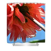 Summer's End Dahlia Shower Curtain