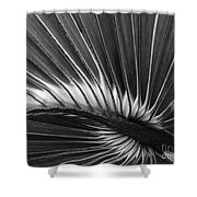 Summers Fan Shower Curtain