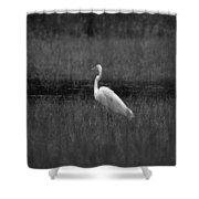 Summer's Night Egret Shower Curtain