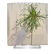 Summers Shadow Shower Curtain