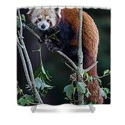 Sumo Posing In Tree Shower Curtain