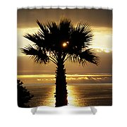 Sun And Palm And Sea Shower Curtain