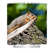 Sun Basking  Shower Curtain by Optical Playground By MP Ray