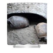 Sun Basking Turtles Shower Curtain