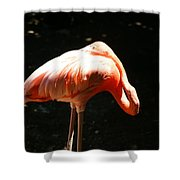 Sun Bathing Shower Curtain