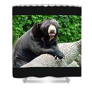 Sun Bear - 09515-1 Shower Curtain