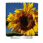 Sun Blessed Shower Curtain