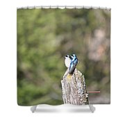 Sun Break Shower Curtain