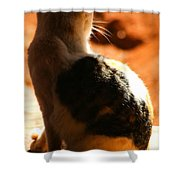 Sun Cat Shower Curtain