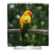 Sun Conure Shower Curtain