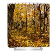 Sun Dappled Autumn Forest  Shower Curtain