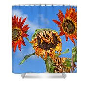 Sun Drenched In Autumn By Diana Sainz Shower Curtain