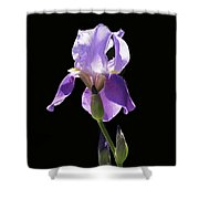 Sun-drenched Iris Shower Curtain