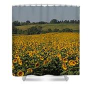 Sun Flower Sea Shower Curtain