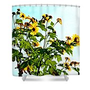Sun Flowers In The Sun Shower Curtain