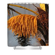 Sun Glowing Palm Shower Curtain