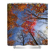 Sun In Fall Forest Canopy  Shower Curtain