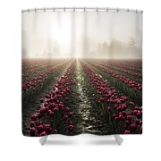 Sun In Fog And Tulips Shower Curtain