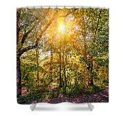 Sun In The Autumn Forest Shower Curtain