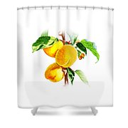Sun Kissed Apricots Shower Curtain