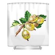 Sun Kissed Gooseberries Branch Shower Curtain