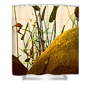 Sun Kissed Grass And Rocks   Shower Curtain