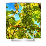 Sun Kissed Green Grapes Shower Curtain by Eti Reid