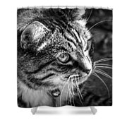 Sun Kissed Kitty Shower Curtain