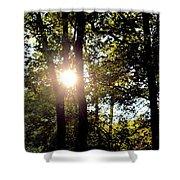 Sun Kissed Trees Shower Curtain