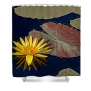 Sun-kissed Water Lily Shower Curtain