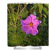 Sun Lit Wildflower Shower Curtain