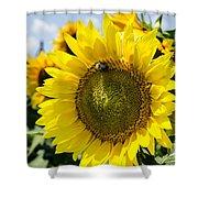 Sun On The Sunflower Shower Curtain