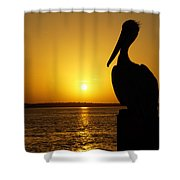 Sun Pelican Shower Curtain