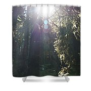 Sun Penetrates The Redwood Forest Shower Curtain