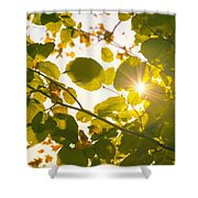 Sun Shining Through Leaves Shower Curtain